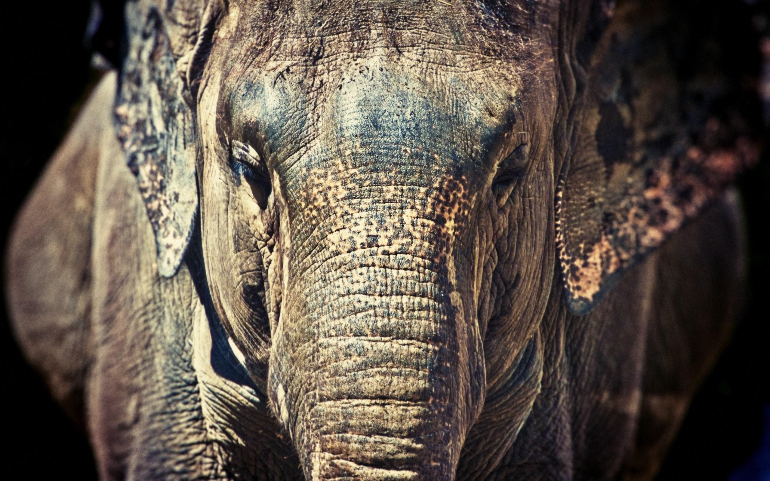 3d Graffiti Wallpapers Free Download Desktop Elephant Hd Wallpapers Pixelstalk Net