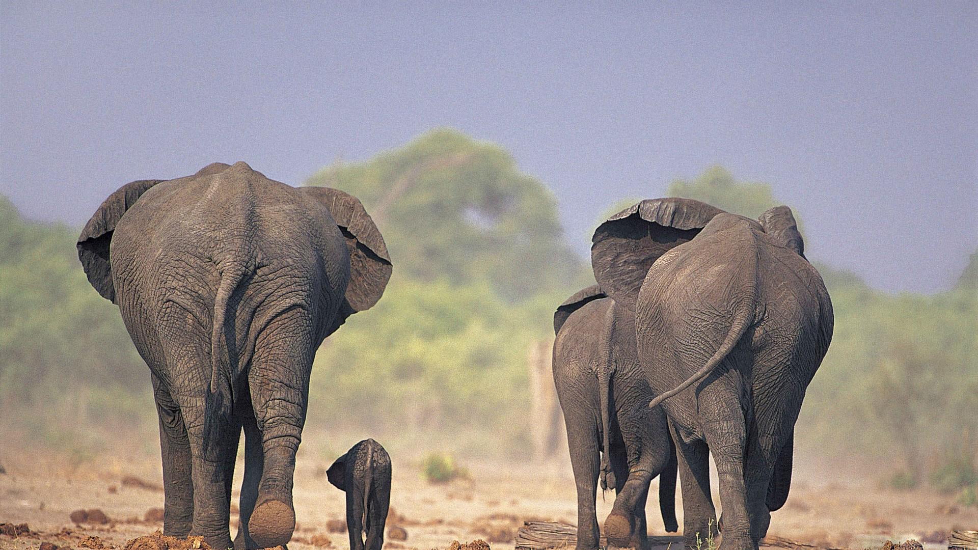 Cute Elephant Cartoon Wallpapers Desktop Elephant Hd Wallpapers Pixelstalk Net