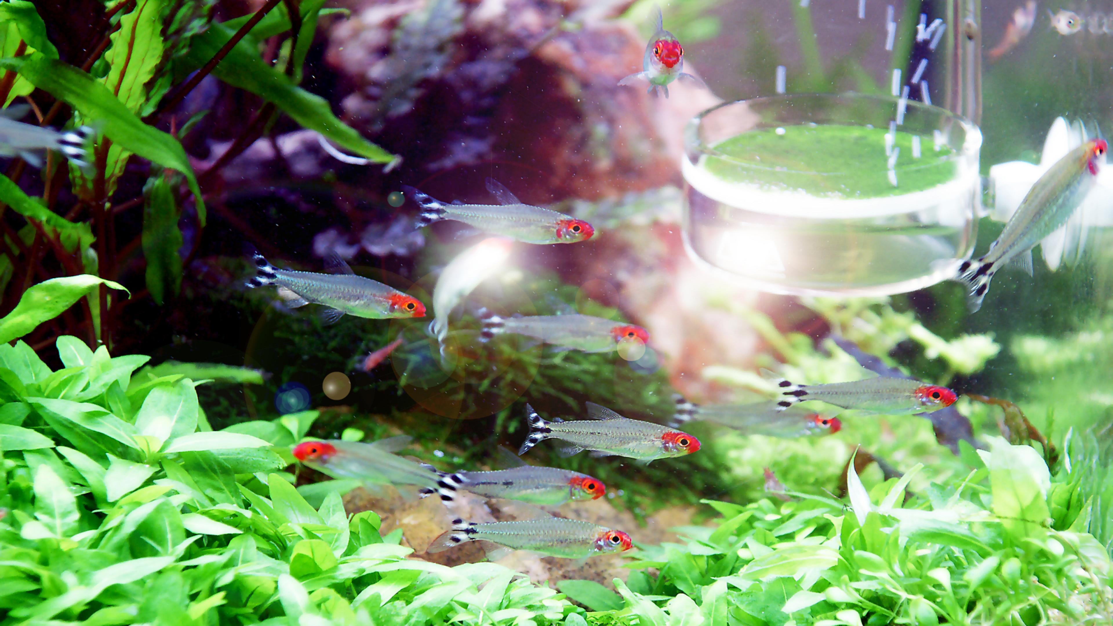Fish Tank 3d Wallpaper Free Download Aquarium Wallpapers Pixelstalk Net