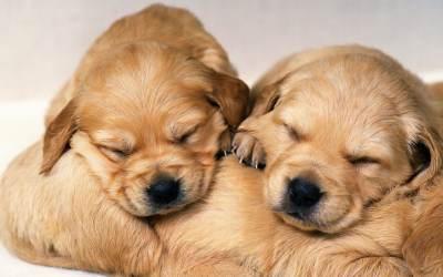 Free Download Cute Puppy Wallpapers | PixelsTalk.Net