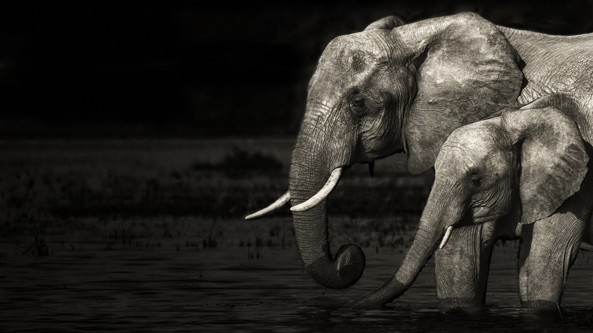 Cute Elephant Cartoon Wallpapers Desktop Elephant Hd Wallpapers Pixelstalk Net