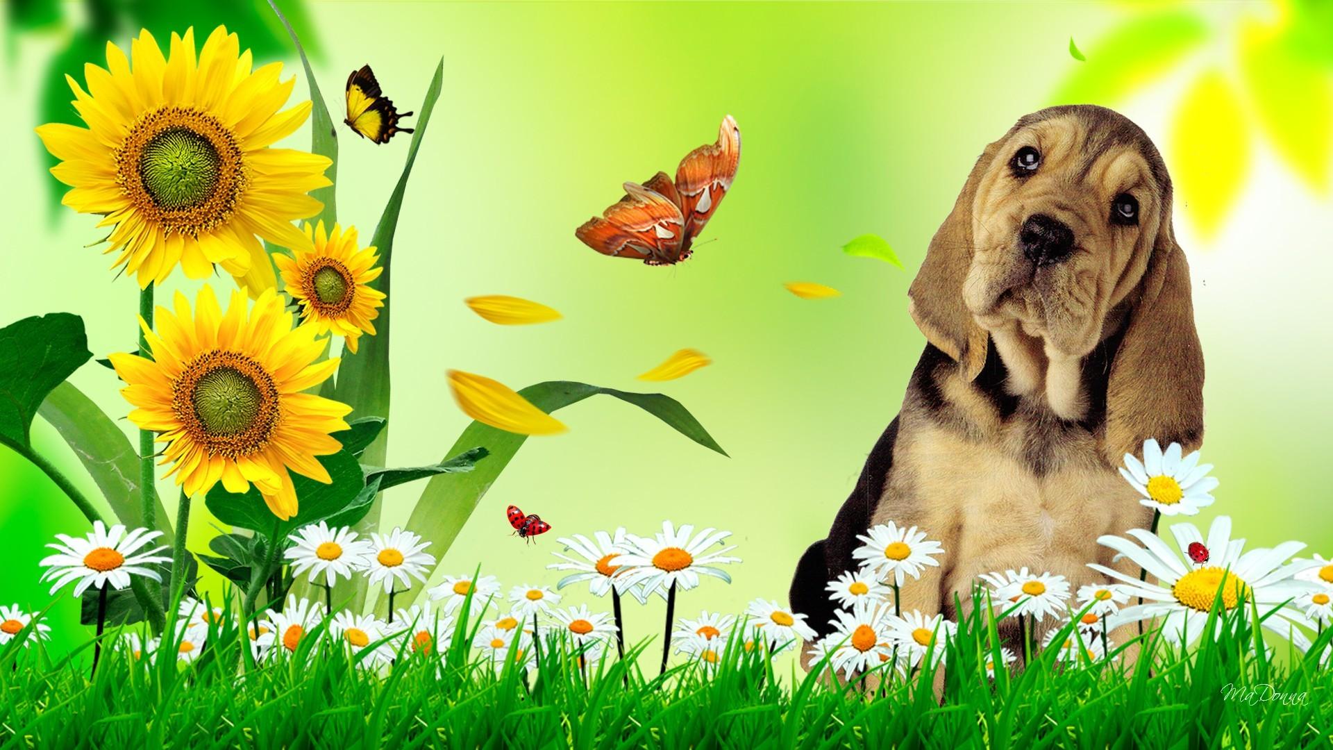 Cute Puppies Wallpaper Backgrounds Summer Wallpaper Hd Free Download Pixelstalk Net