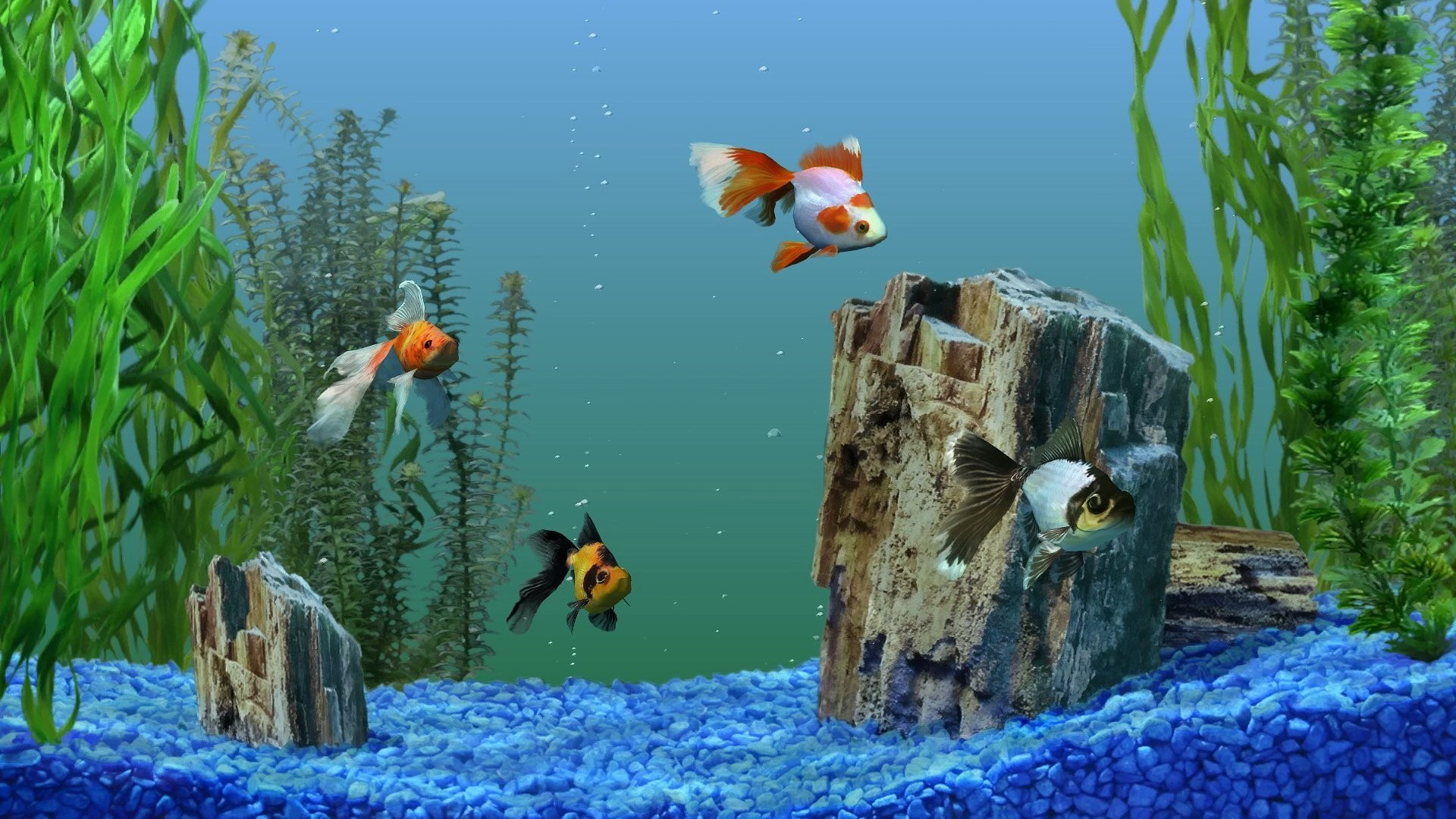 Merry Christmas Desktop Wallpaper 3d Free Download Aquarium Wallpapers Pixelstalk Net