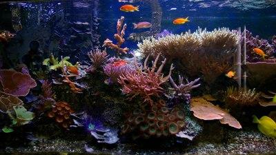 Free Download Aquarium Wallpapers   PixelsTalk.Net