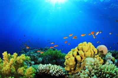 Free Coral Backgrounds | PixelsTalk.Net