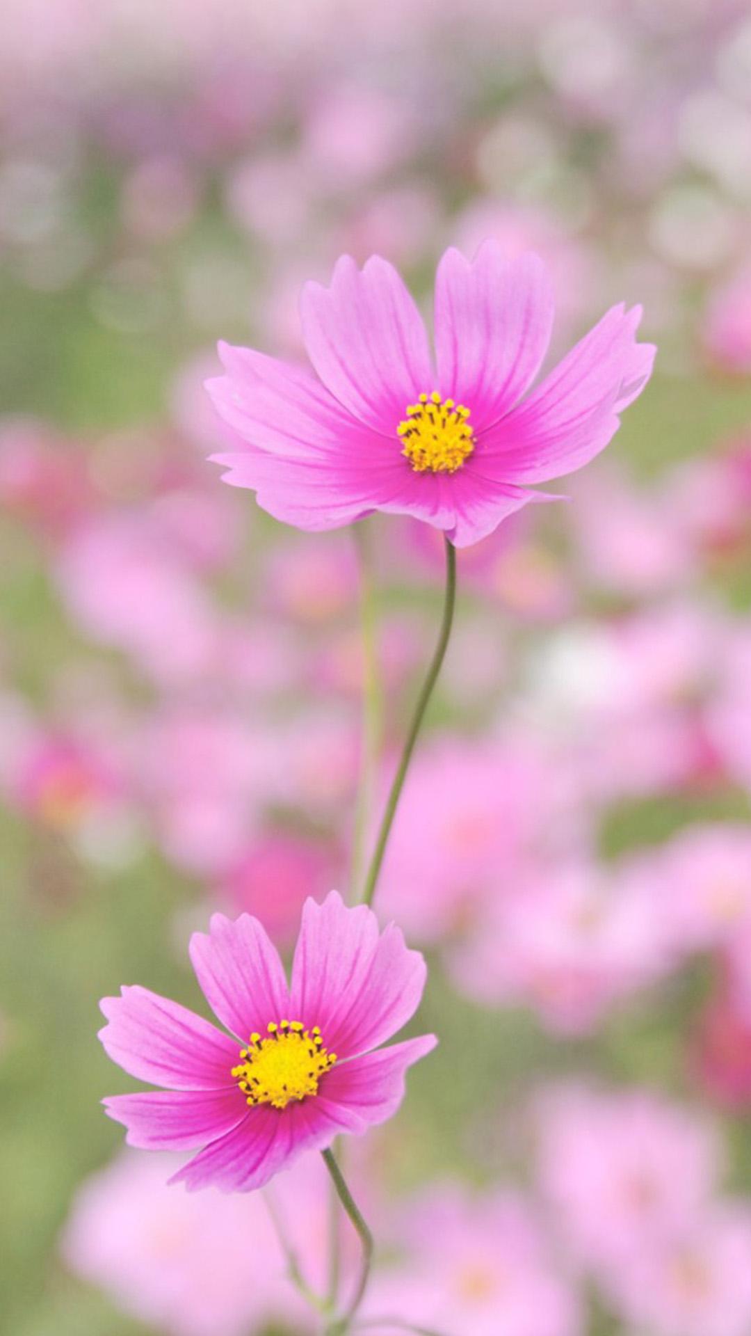 Download Hd Wallpapers Of Inspirational Quotes Flower Iphone Wallpapers Pixelstalk Net