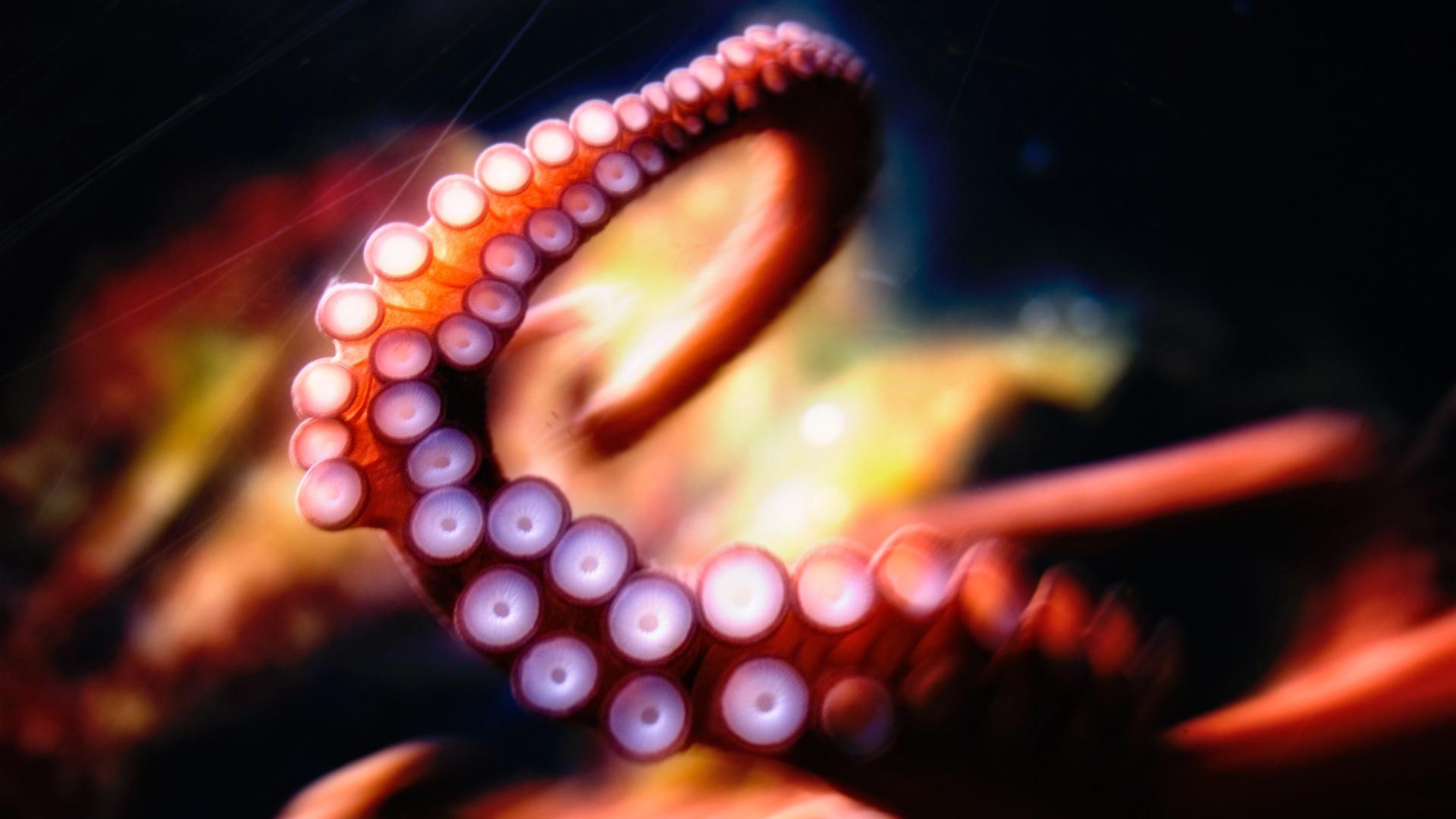 Fall Halloween Desktop Wallpaper Hd Octopus Wallpapers Pixelstalk Net