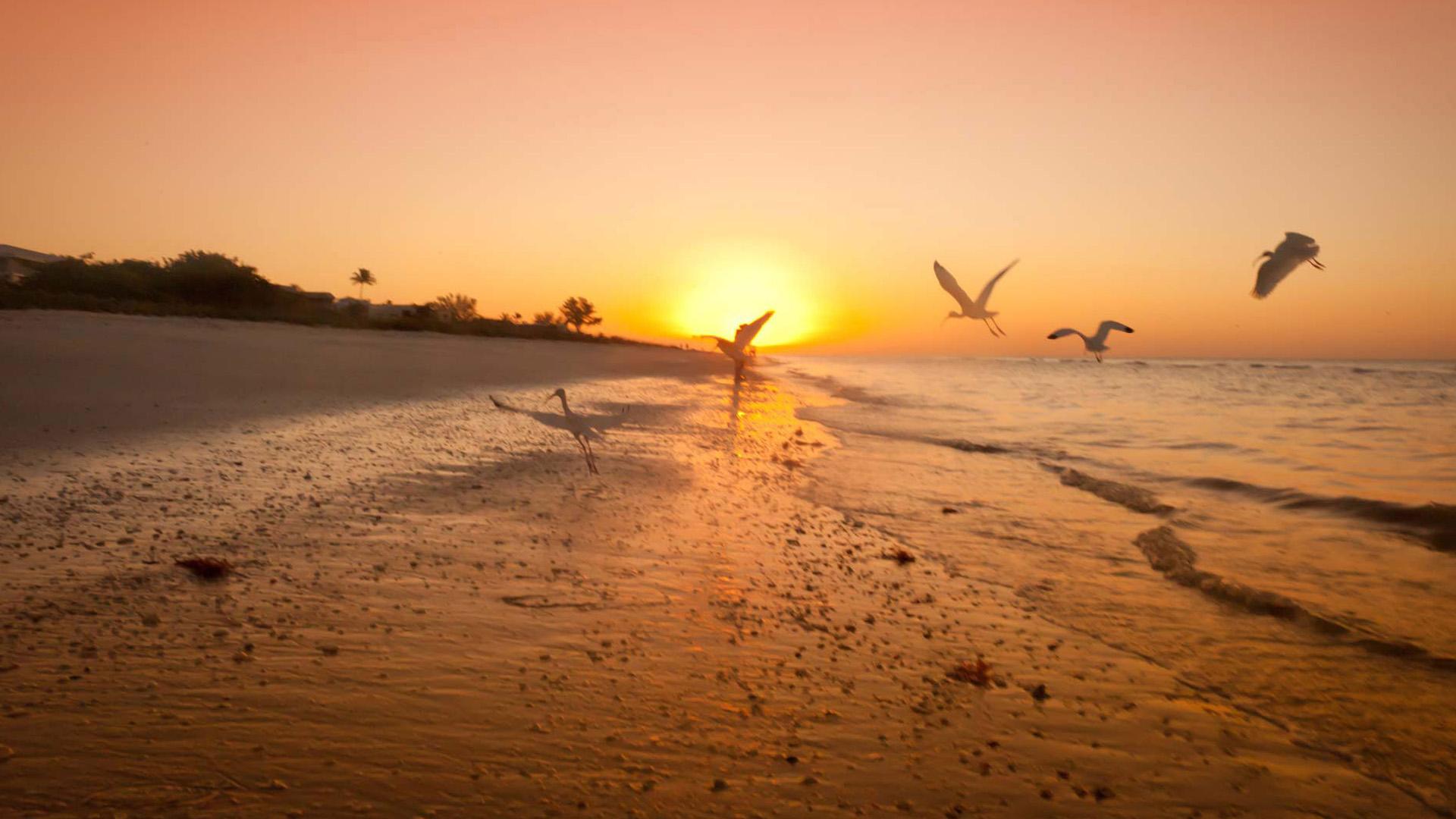 Florida Beach Fall Wallpaper Sunset Beaches Wallpapers Download Free Pixelstalk Net