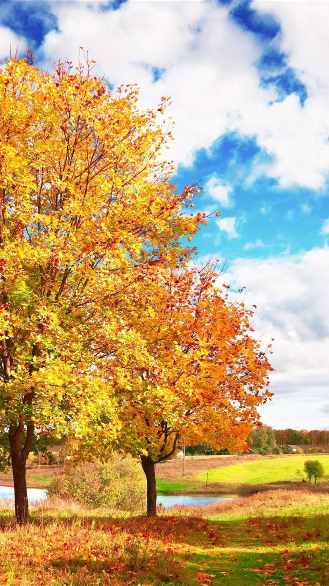 Fall Leaves Ipad Wallpaper Fall Iphone Wallpapers Pixelstalk Net