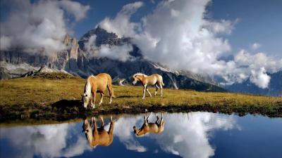 Free HD Horse Backgrounds Desktop | PixelsTalk.Net