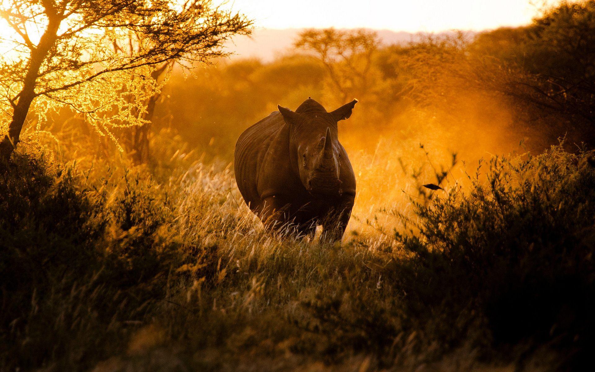 Rhino 3d Wallpaper Africa Wallpaper Hd Pixelstalk Net