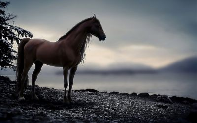 HD Horse Wallpaper Free Download | PixelsTalk.Net