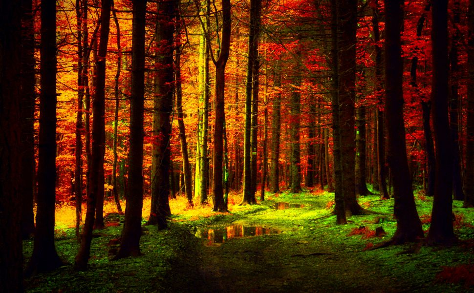 Free Fall Widescreen Wallpaper Autumn Forest Wallpaper For Desktop Pixelstalk Net