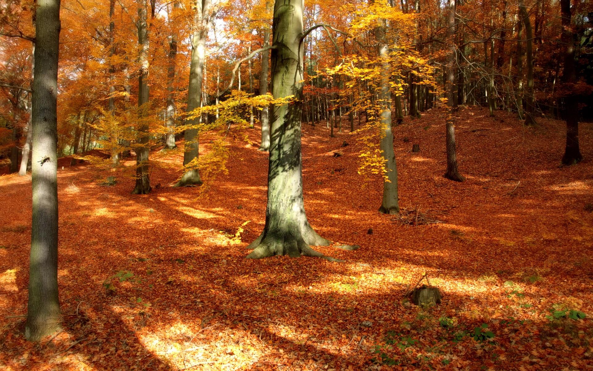Free Wallpapers Fall Season Autumn Forest Wallpaper For Desktop Pixelstalk Net