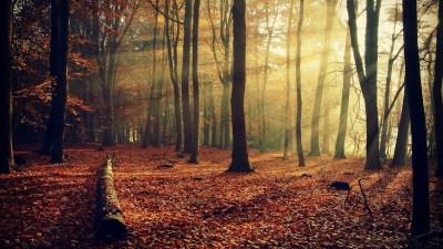 Autumn Forest Background Download Free | PixelsTalk.Net