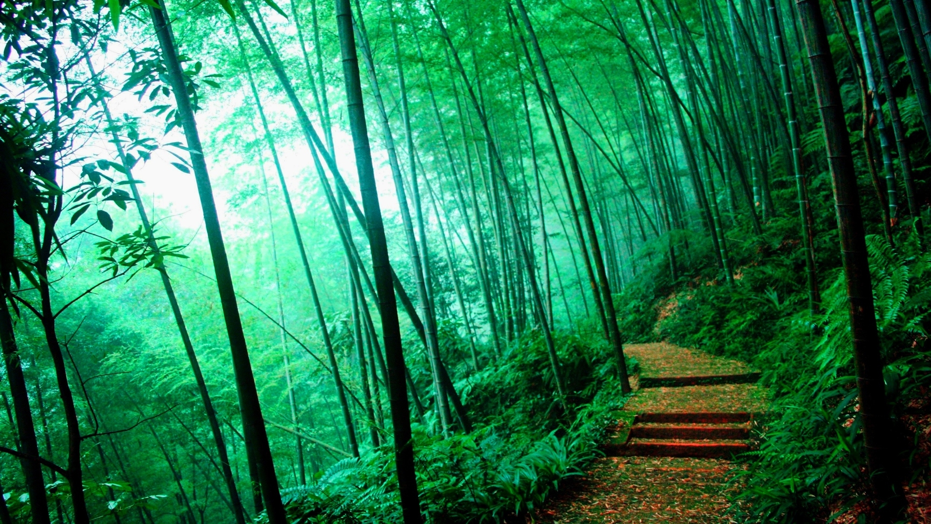 New Year Wallpapers 3d Bamboo Forest Hd Wallpaper Pixelstalk Net