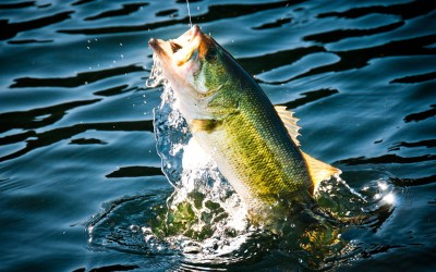 Bass Fishing Wallpaper HD | PixelsTalk.Net