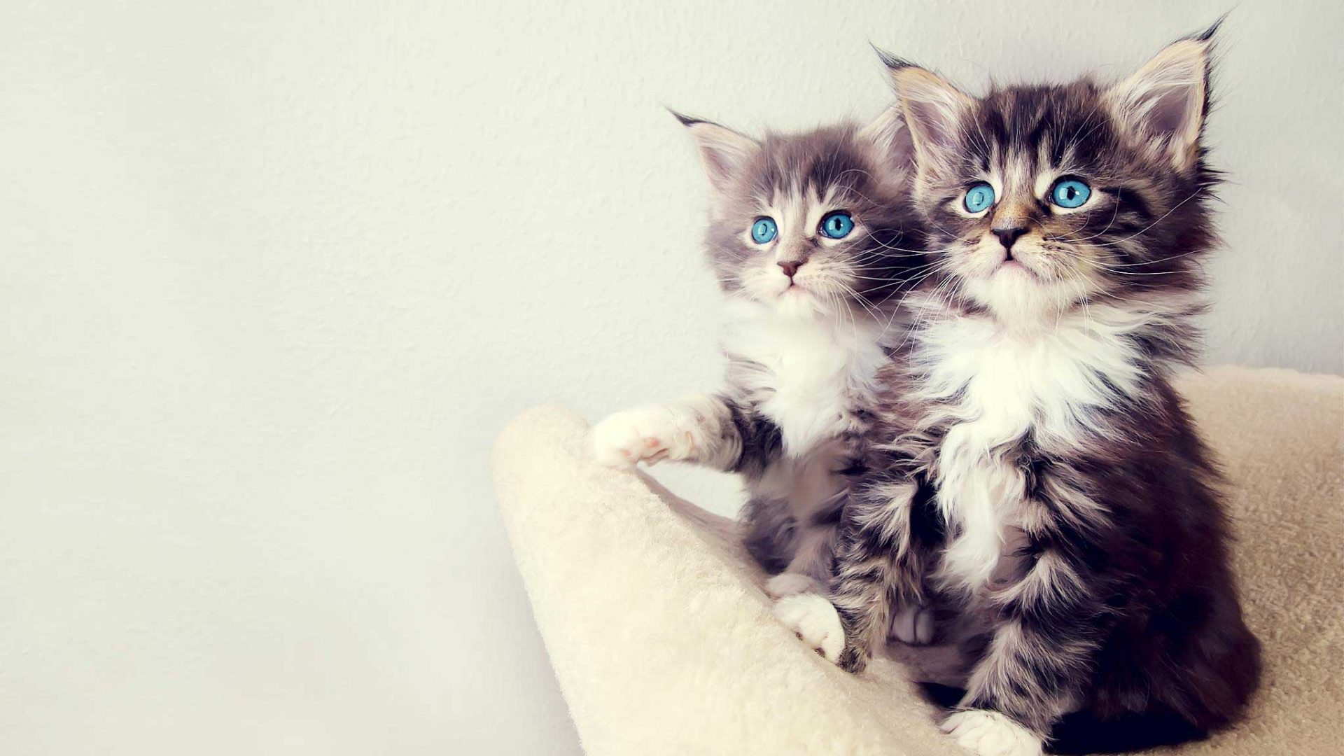 Cute Anime Couple Wallpaper Download Cat Wallpaper Tumblr Pixelstalk Net