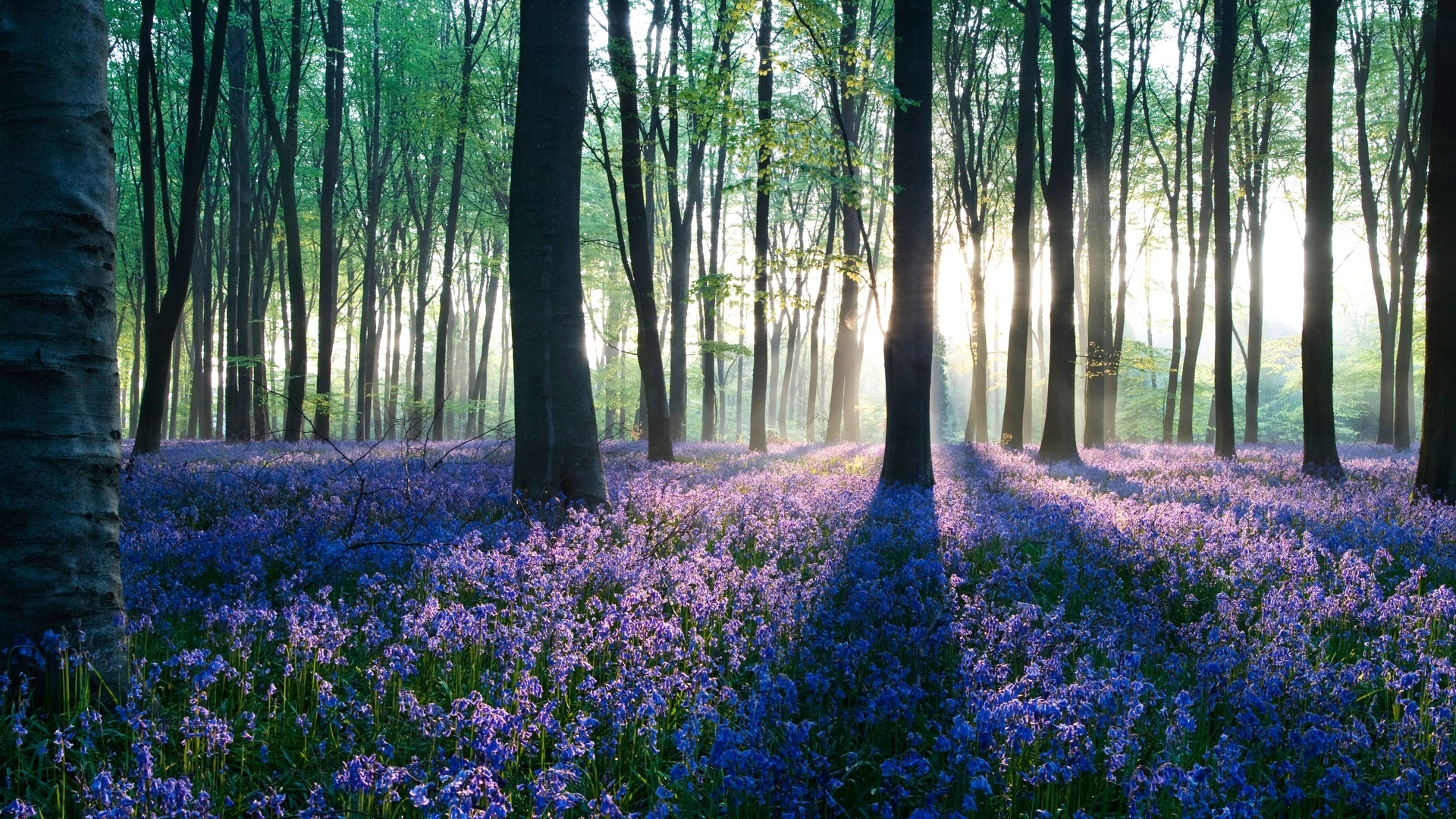 3d Wallpapers For Spring Forest Desktop Wallpaper Hd Pixelstalk Net