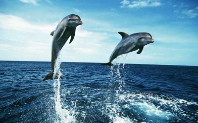 Dolphin Wallpapers HD | PixelsTalk.Net