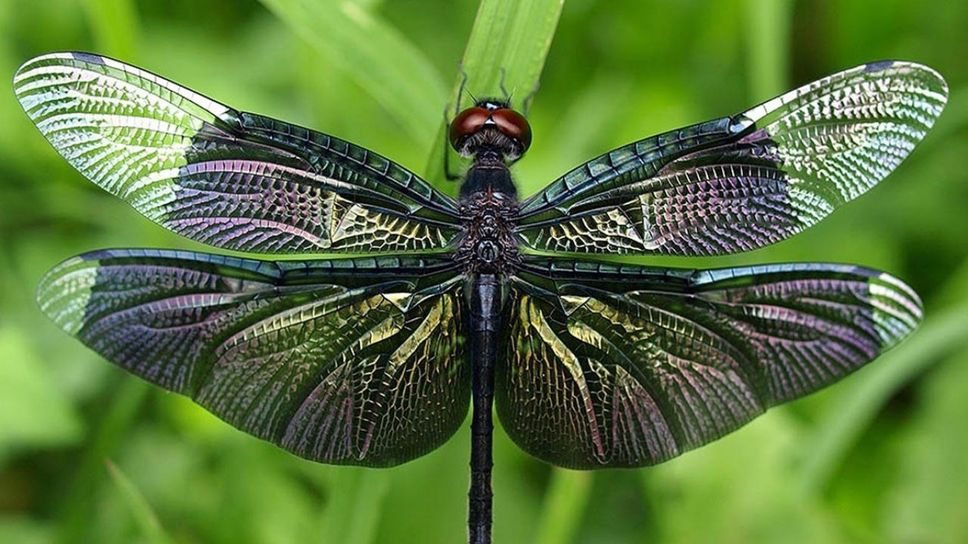 Beautiful Fall Wallpaper For Mobile Dragonfly Wallpapers Hd Pixelstalk Net