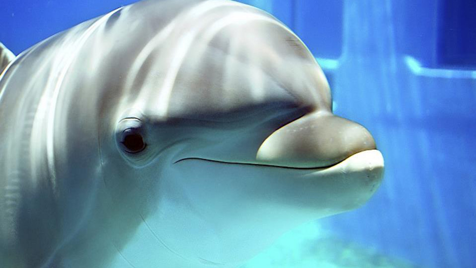 Cute Dolphin Wallpapers Dolphin Wallpapers Hd Pixelstalk Net
