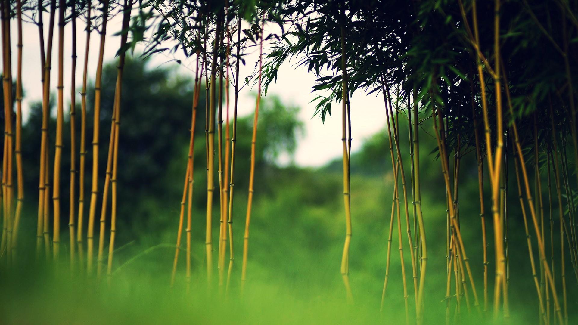 Fall Anime Wallpaper Bamboo Forest Hd Wallpaper Pixelstalk Net