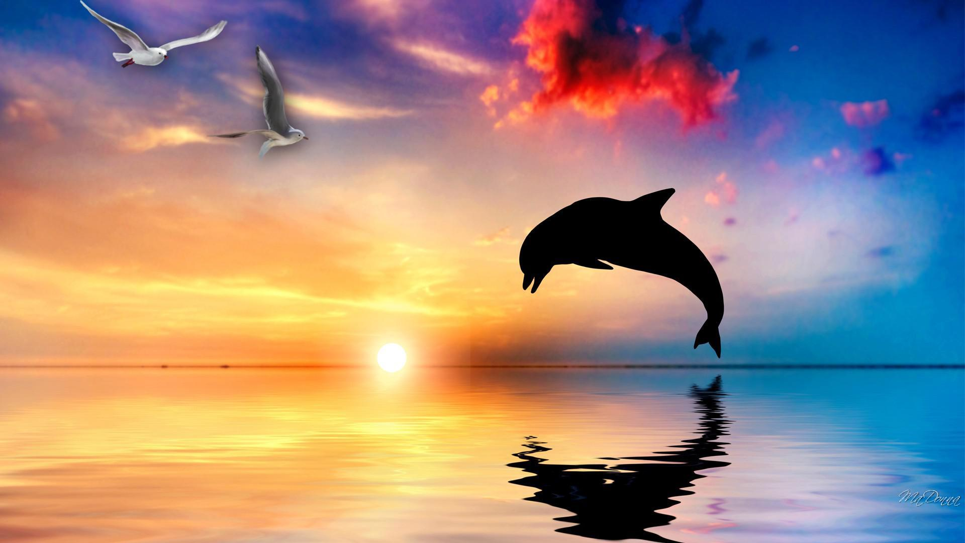 Cute Baby Dolphin Wallpaper Dolphin Wallpapers Hd Pixelstalk Net