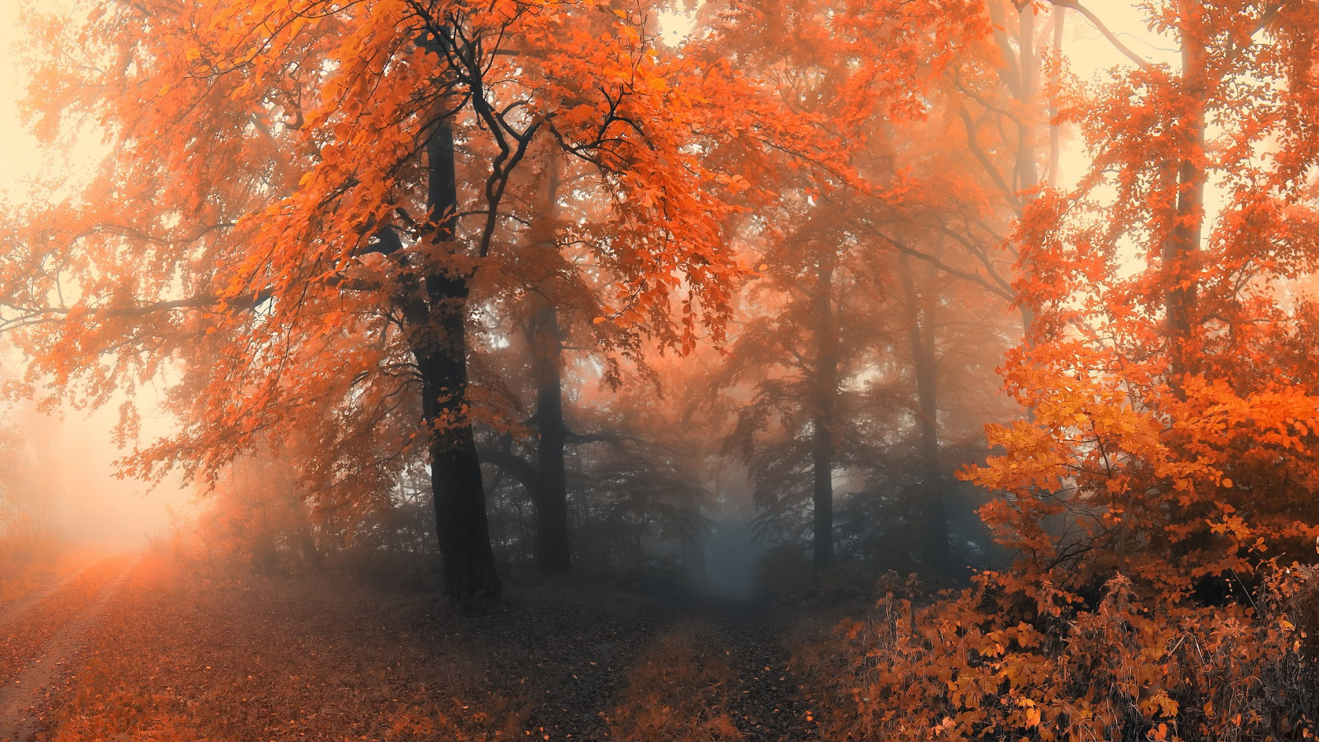 Free Fall Images Desktop Wallpaper Autumn Forest Wallpaper For Desktop Pixelstalk Net