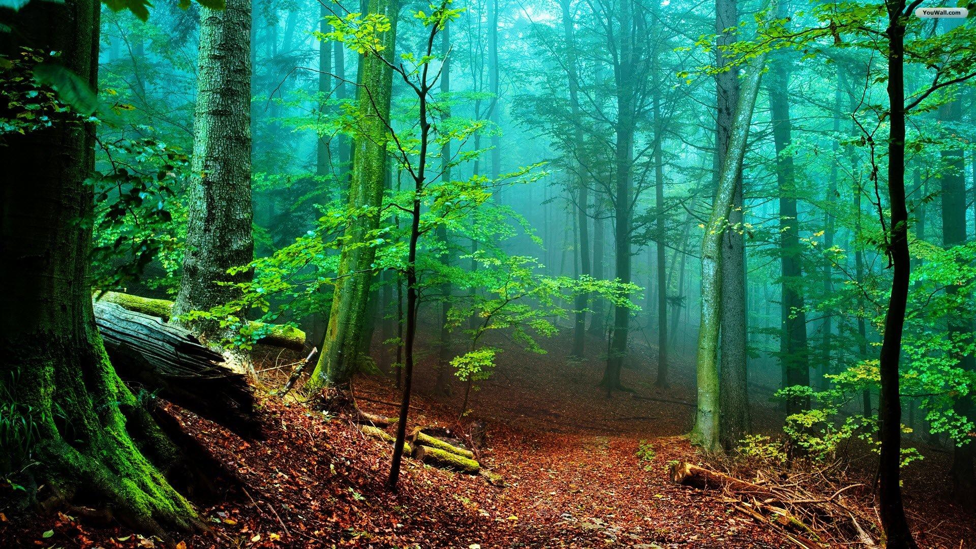 Wallpaper Backgrounds Fall Forest Backgrounds Hd Free Download Pixelstalk Net