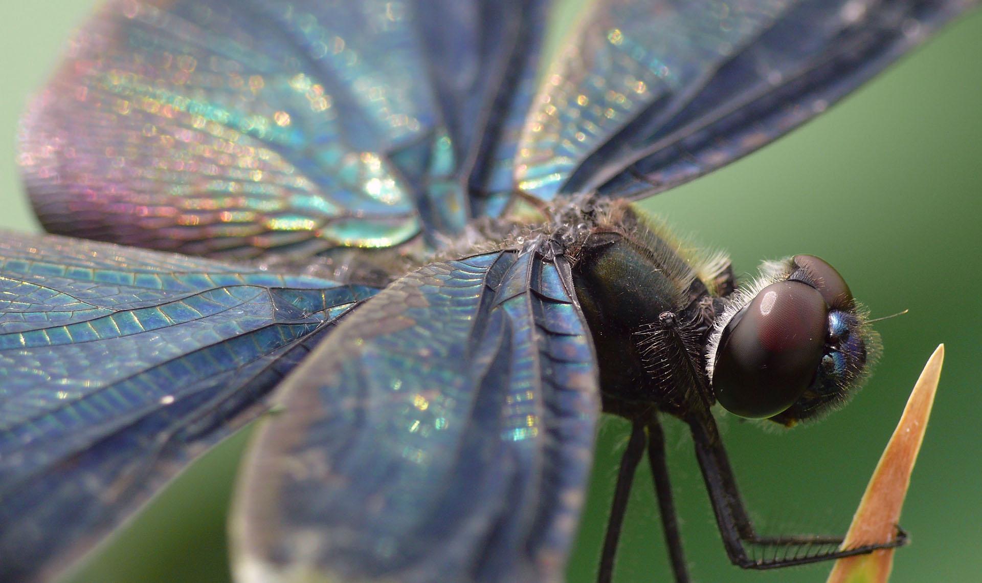 Inspirational Quotes Desktop Wallpaper Free Download Dragonfly Wallpapers Hd Pixelstalk Net