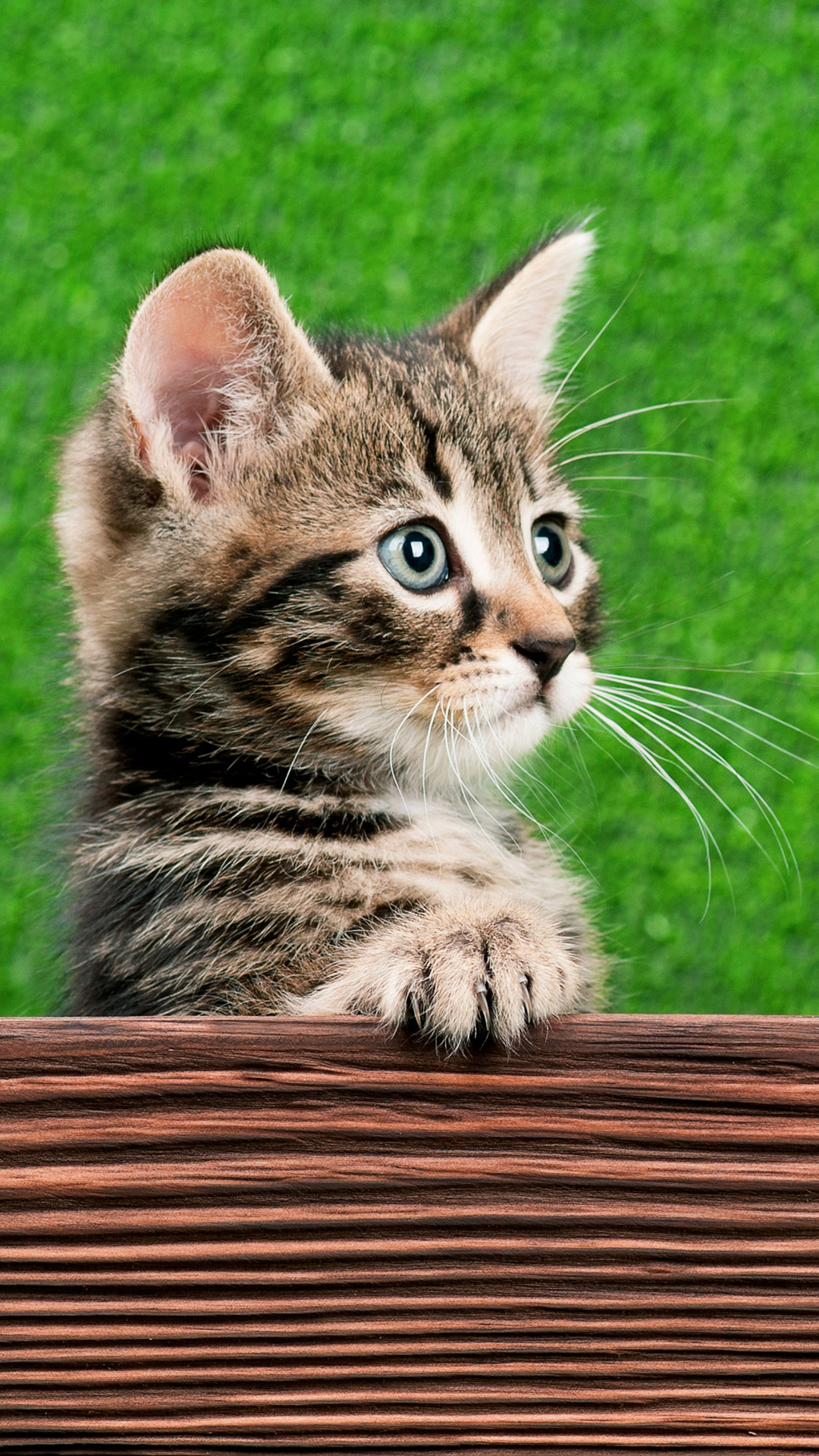 Cute Live Wallpapers For Mobile Cat Iphone Wallpapers Pixelstalk Net