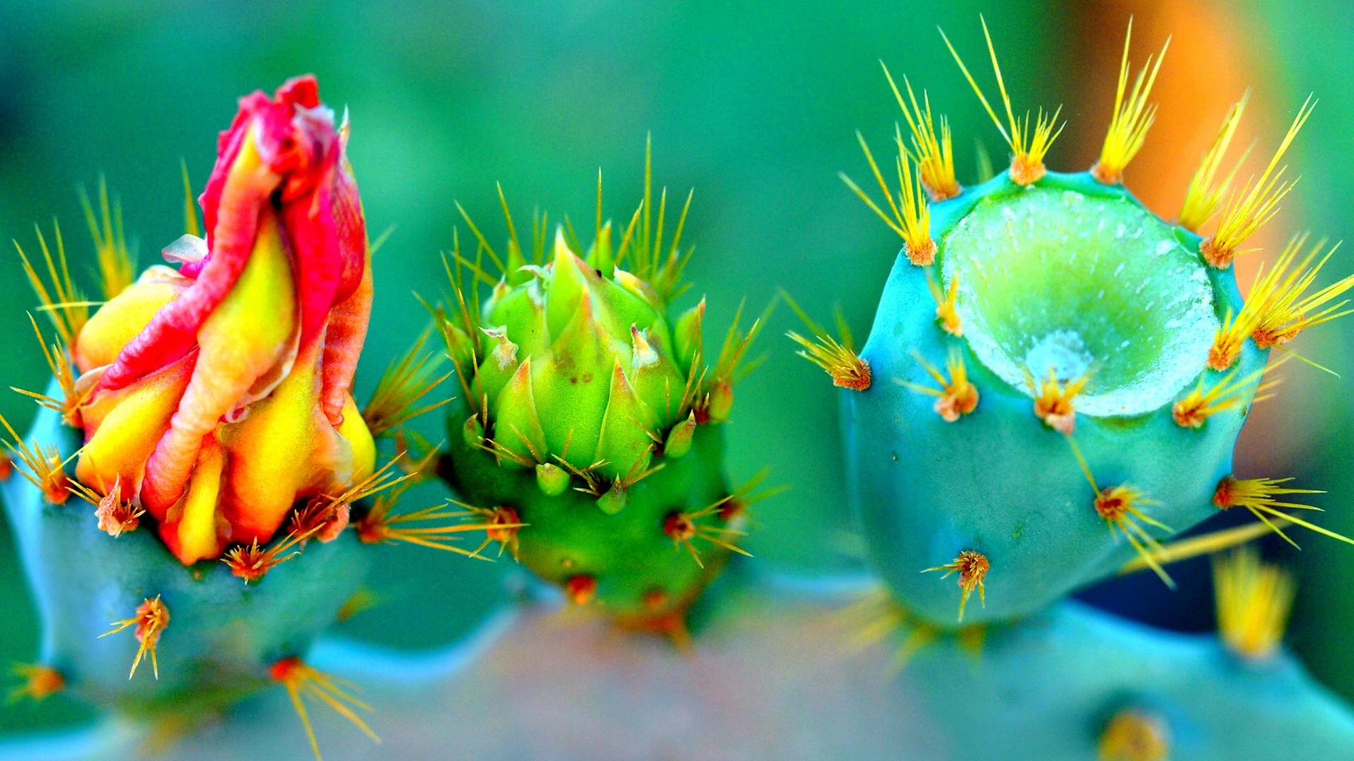 Pixel Forest Wallpaper Cute Cactus Desktop Background Pixelstalk Net