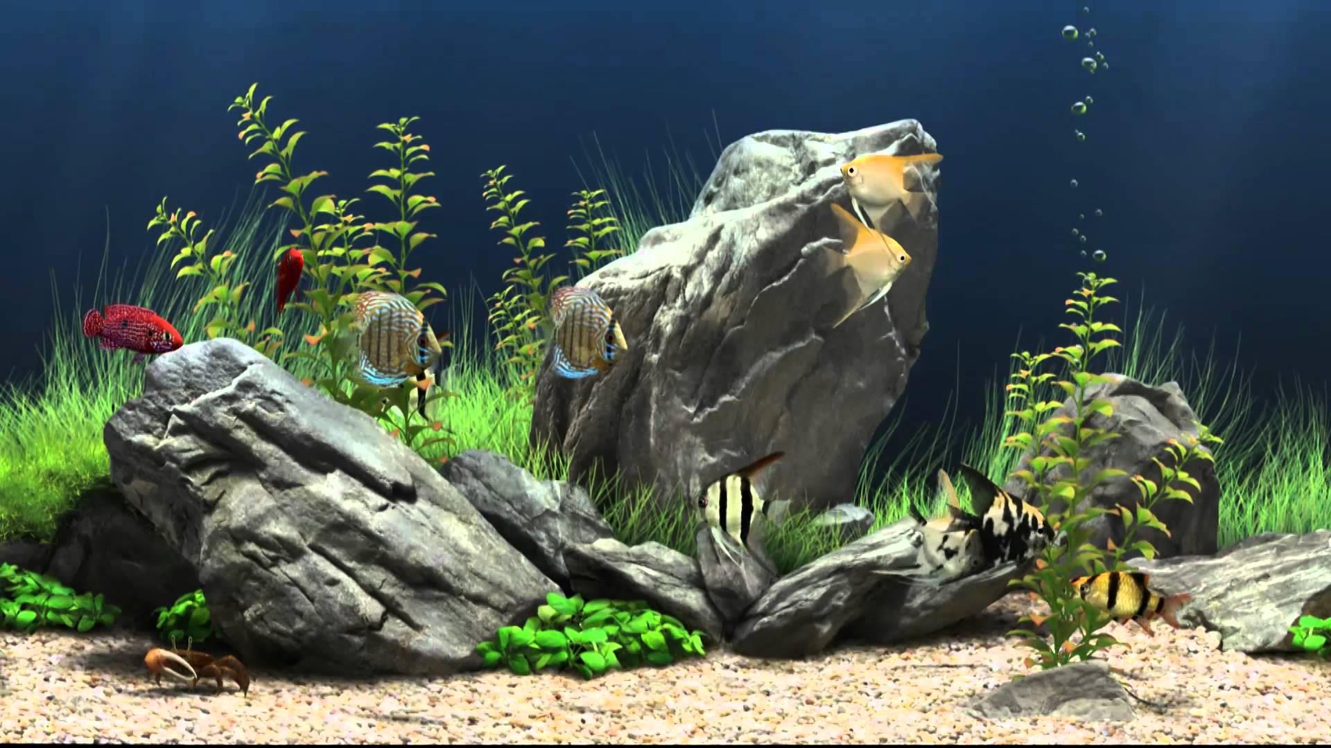 3d Wallpaper Windows 7 Animated Fish Tank Backgrounds Pixelstalk Net