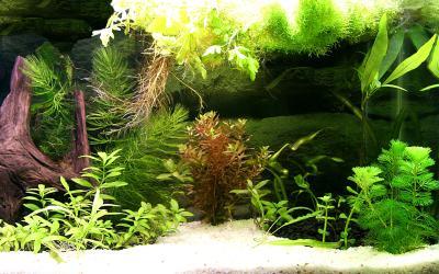 Fish Tank Backgrounds Download | PixelsTalk.Net