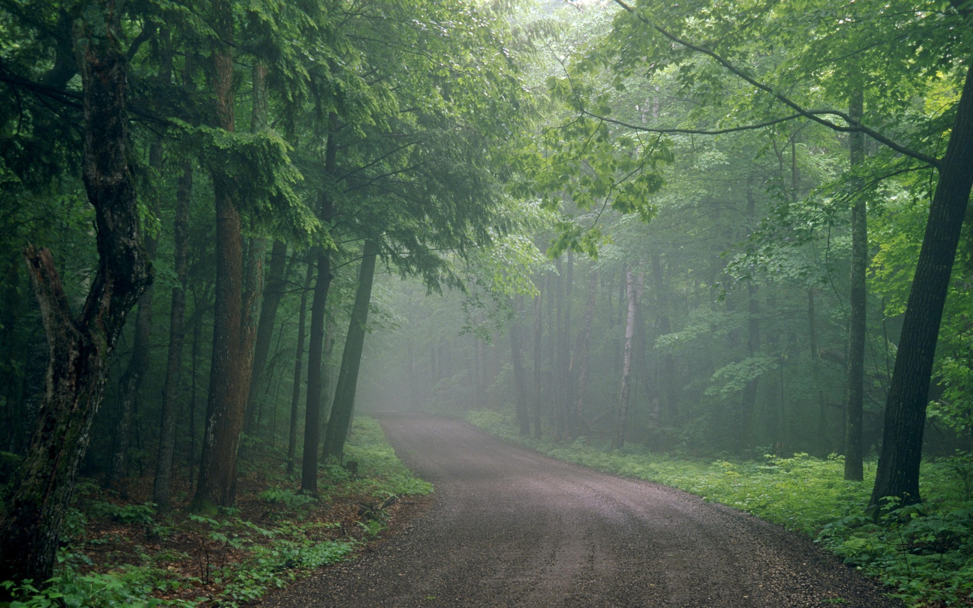 Inspirational Wallpapers With Quotes High Resolution Foggy Forest Backgrounds Free Download Pixelstalk Net