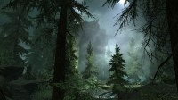 Foggy Forest Backgrounds Free Download | PixelsTalk.Net
