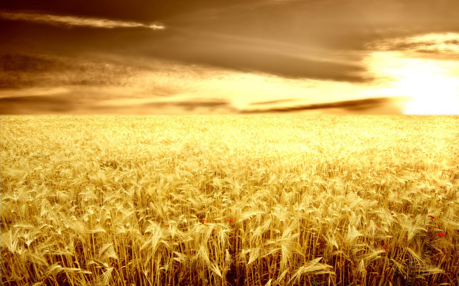 Fall Autumn Wallpaper Farming Backgrounds Download Free Pixelstalk Net