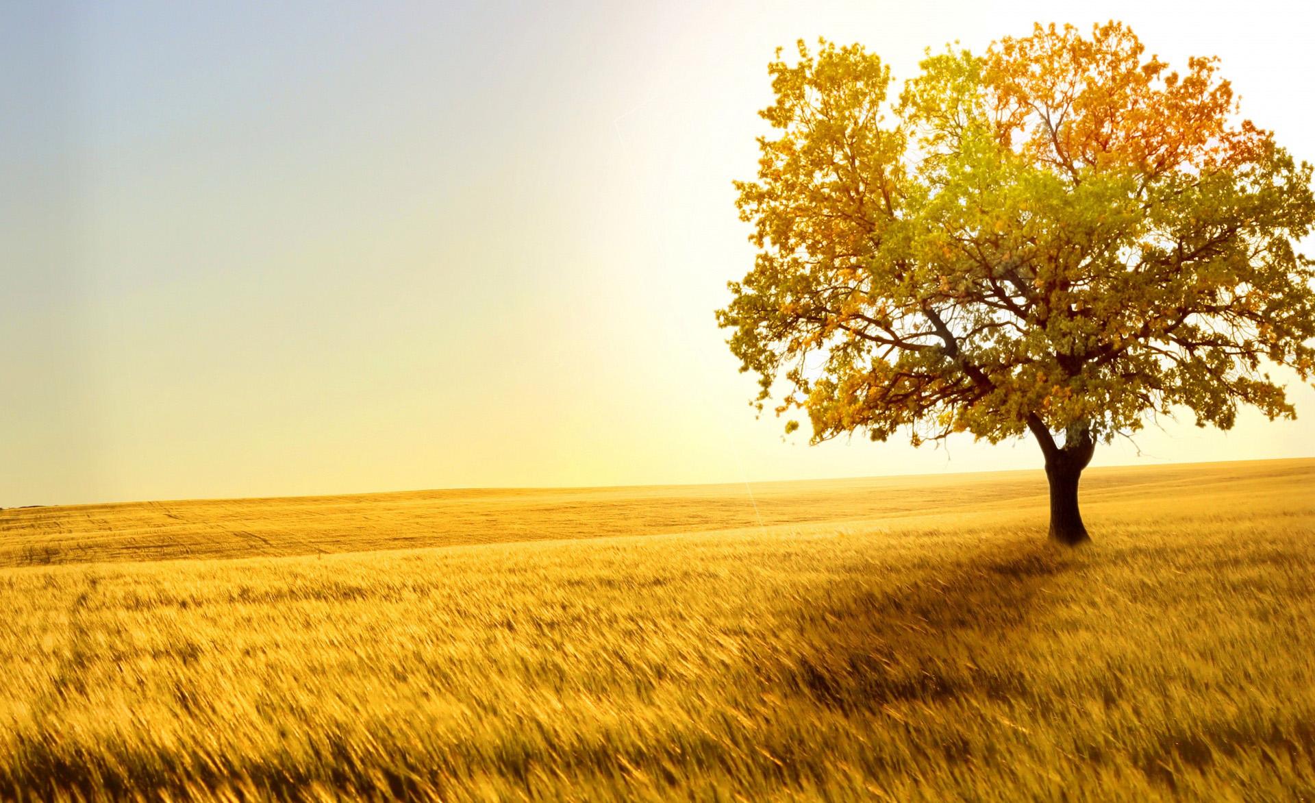 Images Of Fall Season Wallpaper Field Wallpapers Hd Pixelstalk Net