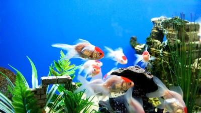 Fish Tank Backgrounds | PixelsTalk.Net
