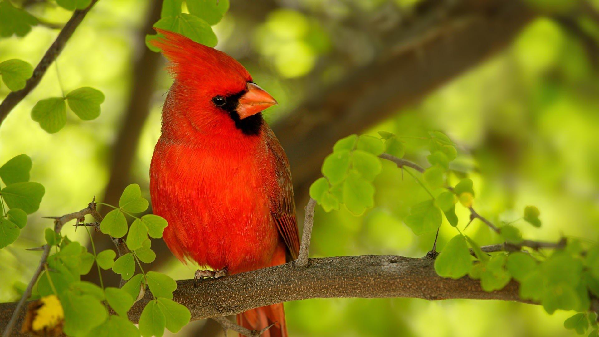 Happy Quotes Iphone Wallpaper Free Download Cardinal Background Pixelstalk Net