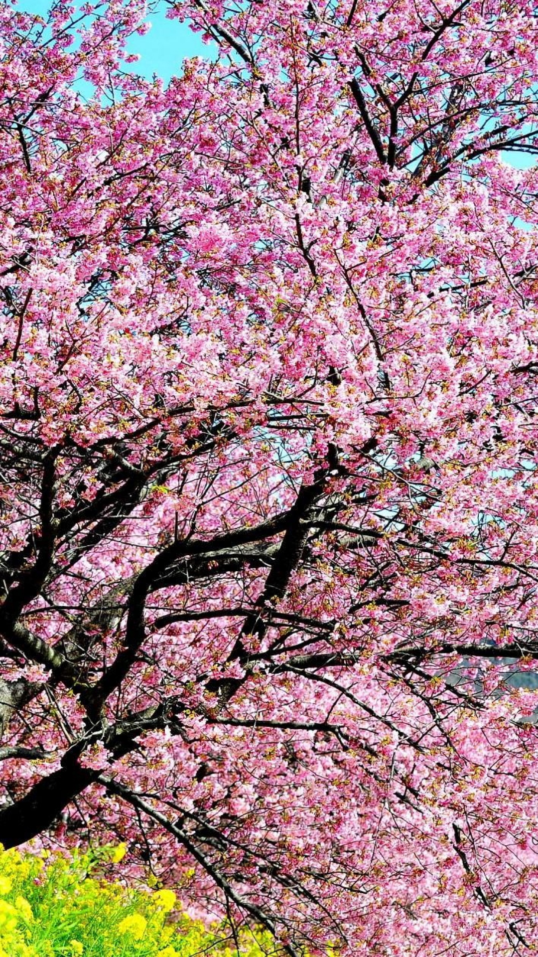 Bleach Wallpaper 3d Cherry Blossom Iphone Background Download Free