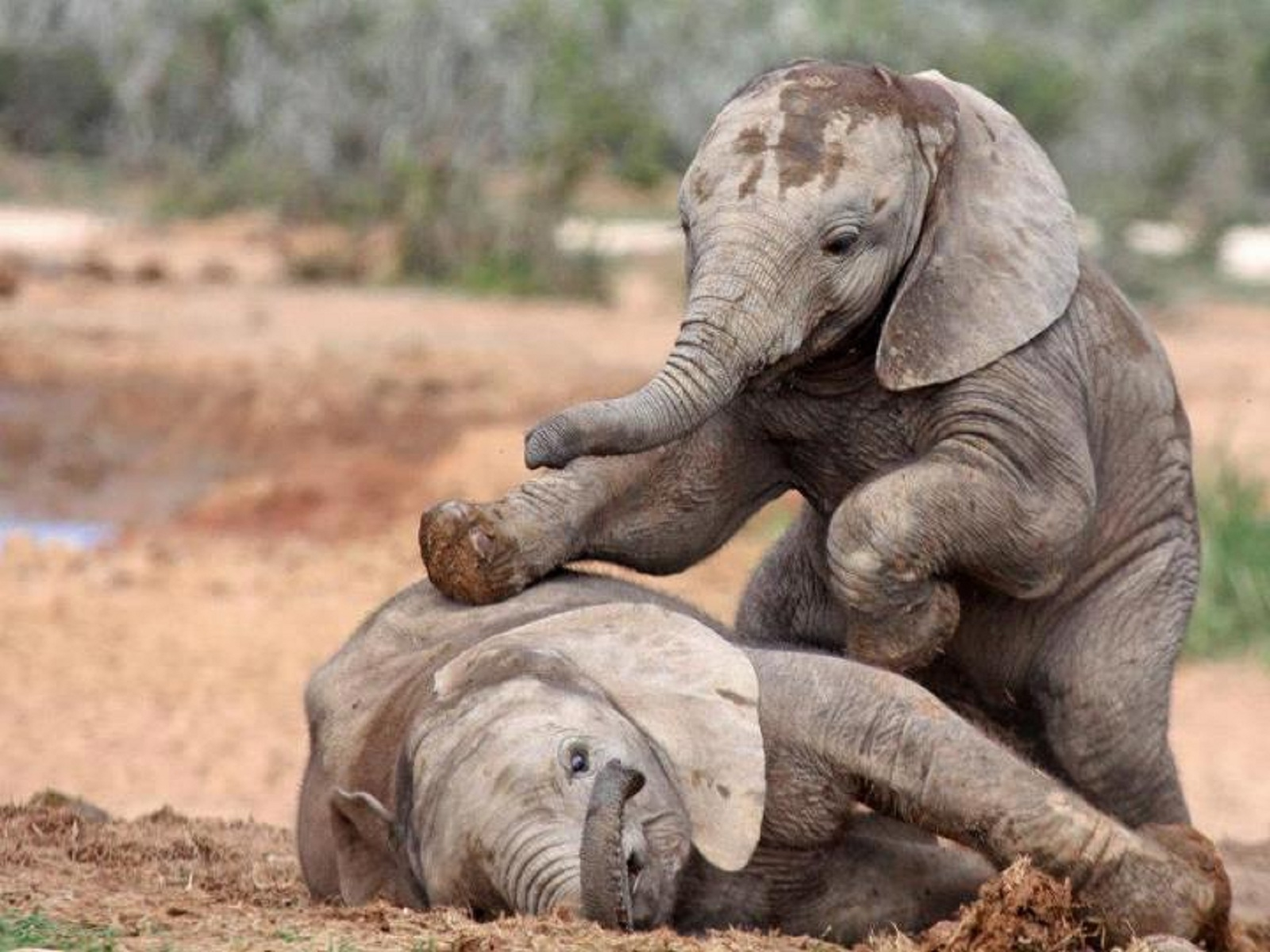 Cute Cry Baby Wallpaper Hd Baby Elephant Wallpaper Pixelstalk Net