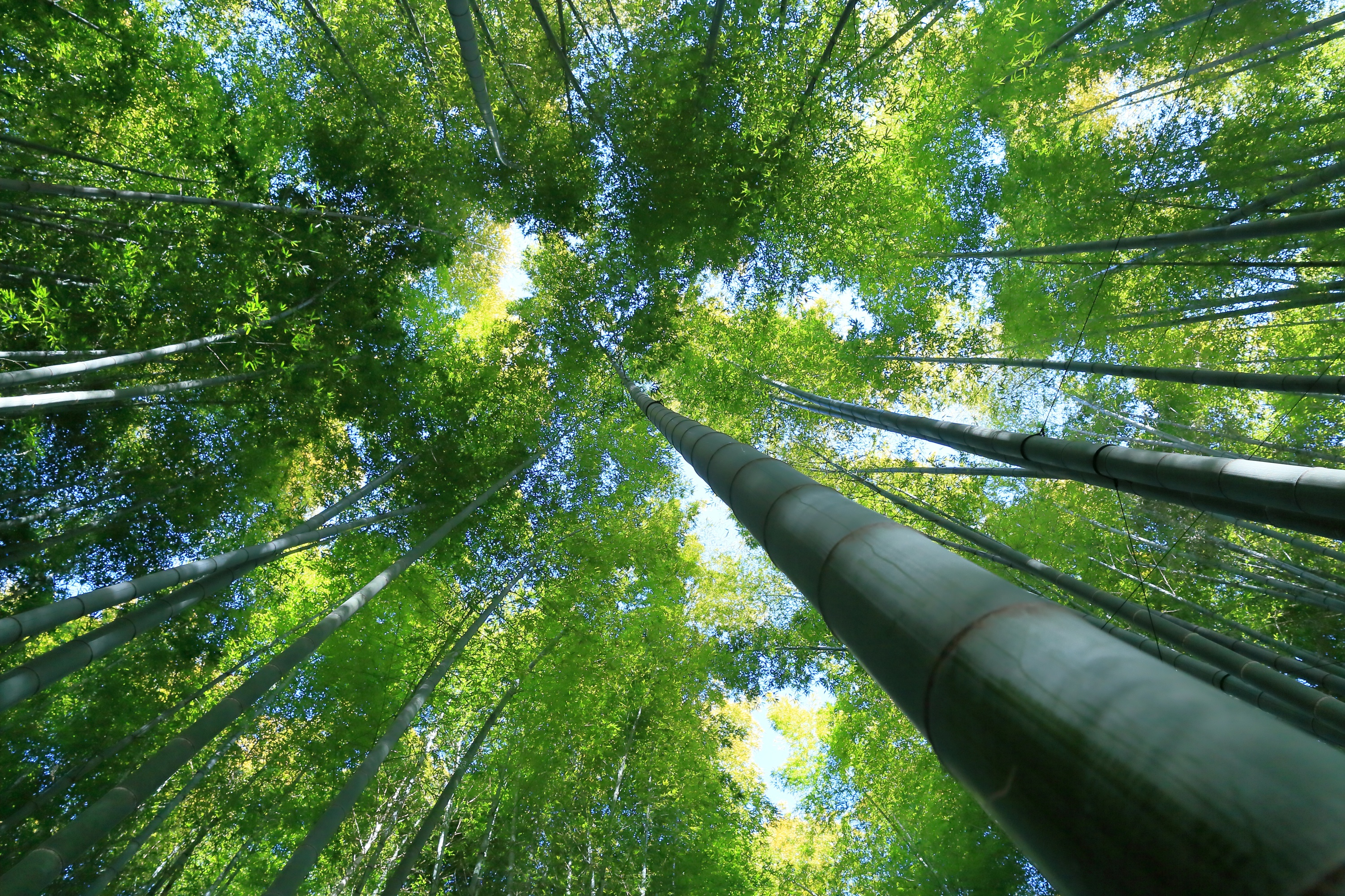 3d Wallpaper Hd Nature For Mobile Download Free Bamboo Forest Background Pixelstalk Net