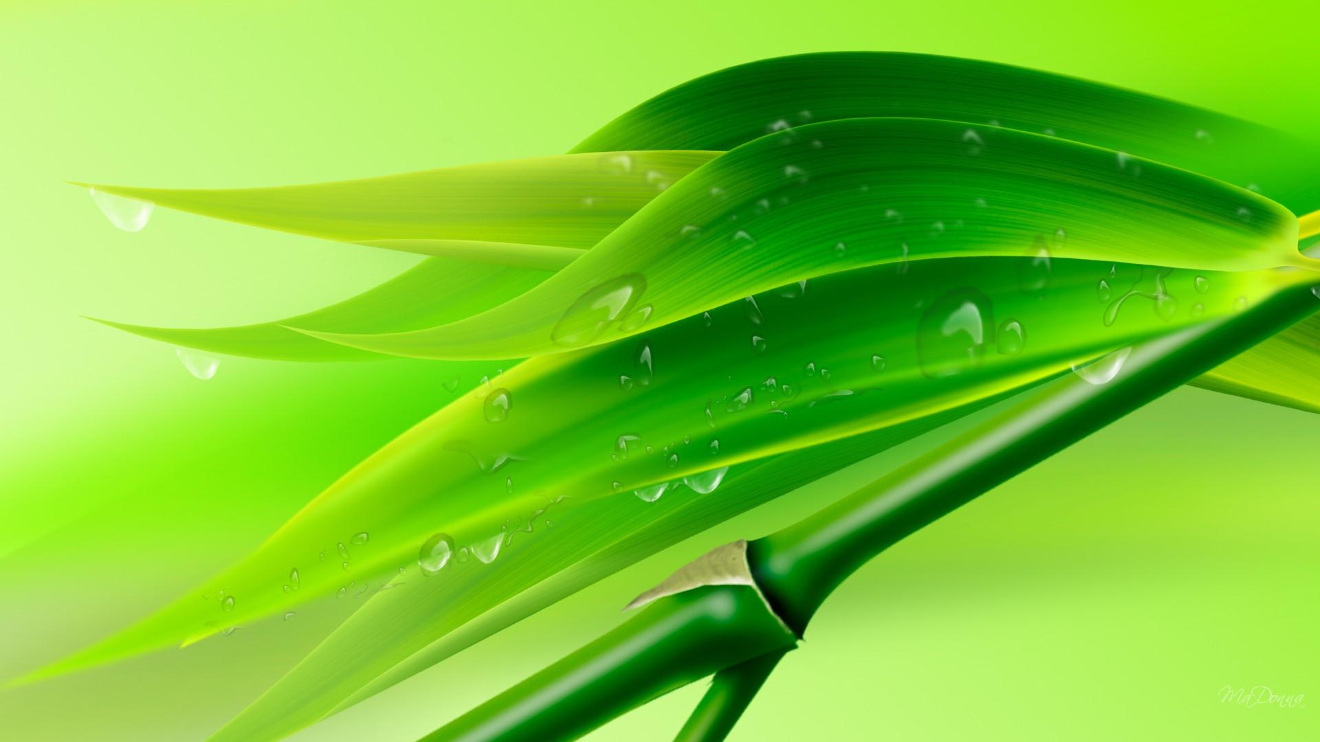 3d Water Drop Wallpapers Desktop Bamboo Wallpaper Hd Pixelstalk Net