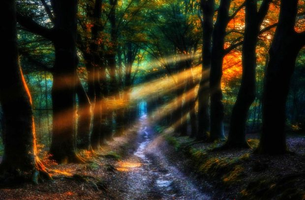 Wallpapers Pc 3d Enchanted Forest Backgrounds Free Download Pixelstalk Net