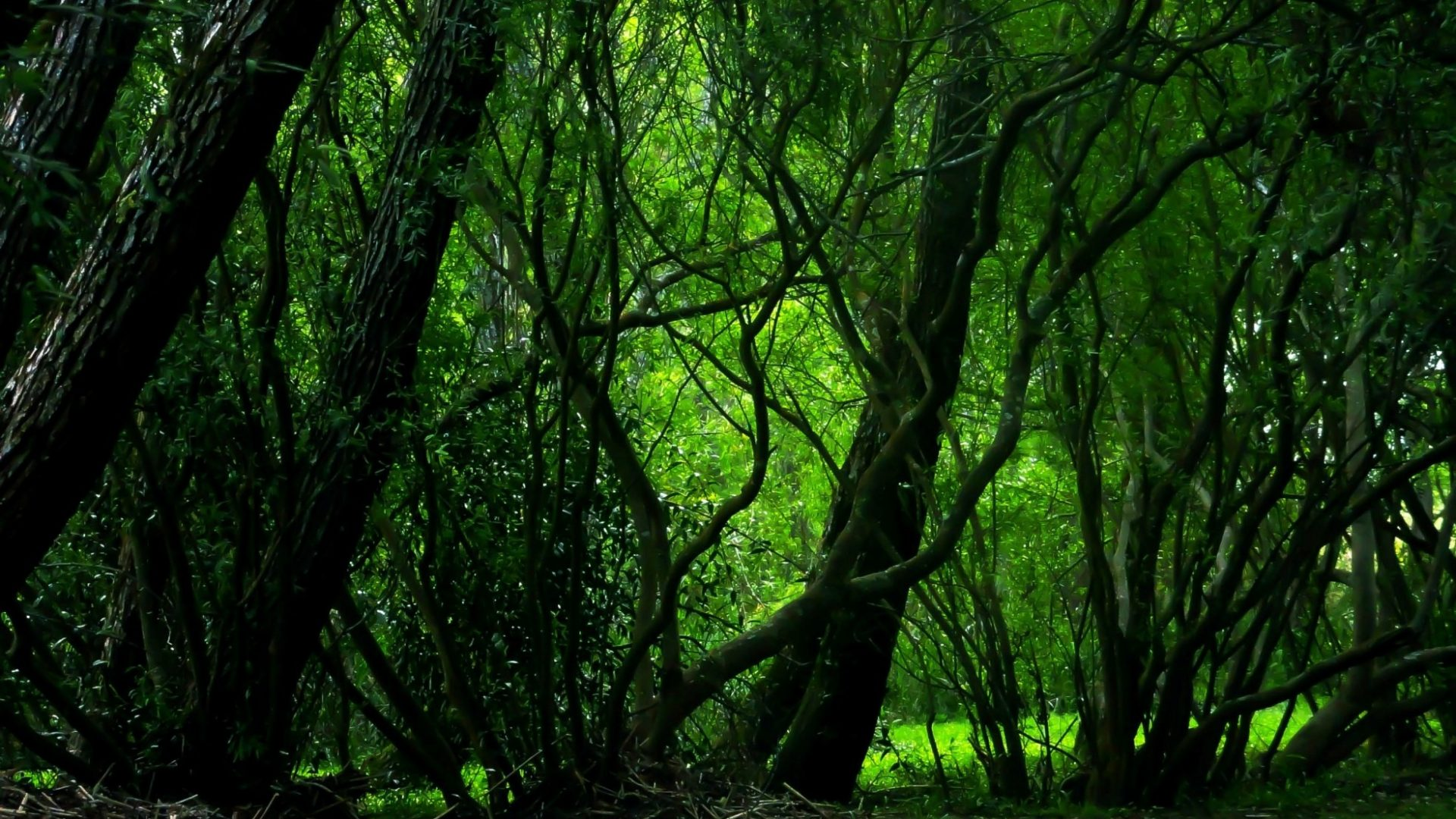 3d Forest Wallpaper Backgrounds Dark Woods Hd Backgrounds Pixelstalk Net