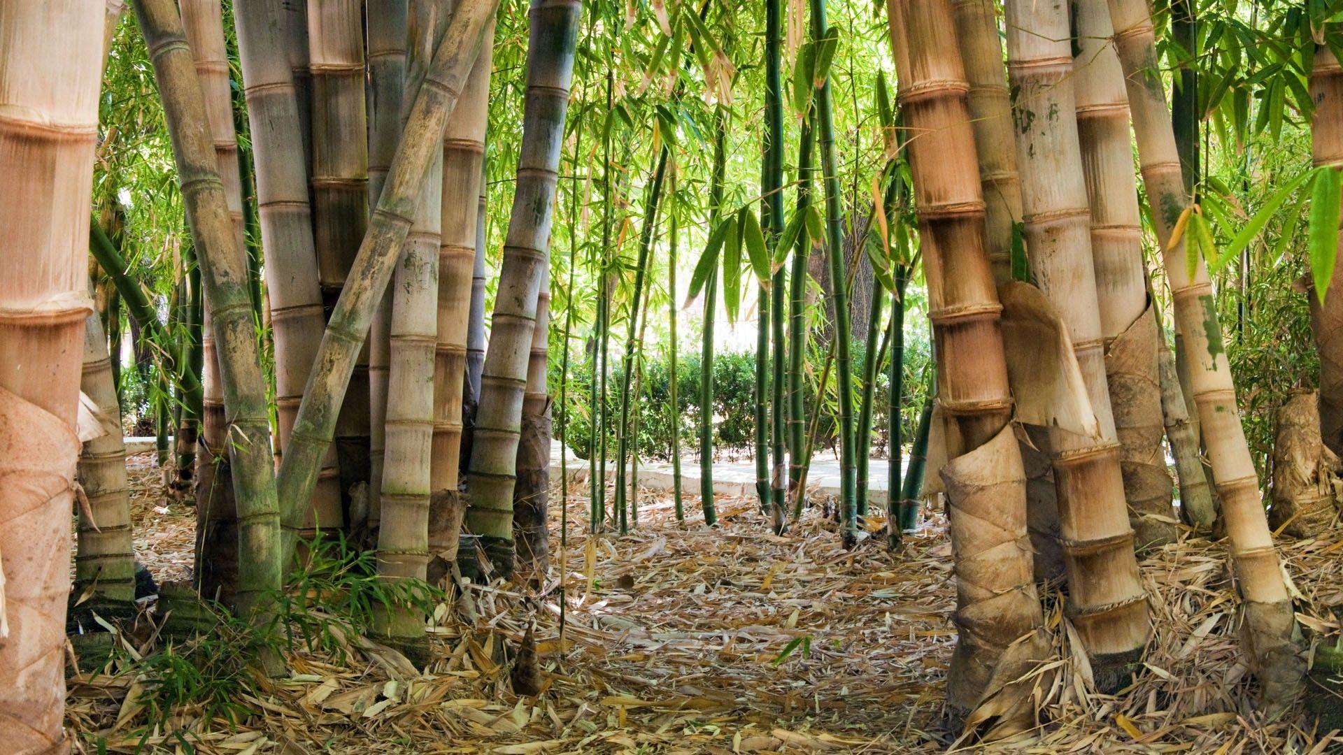 Green 3d Wallpaper Hd Bamboo Forest Hd Wallpaper Pixelstalk Net