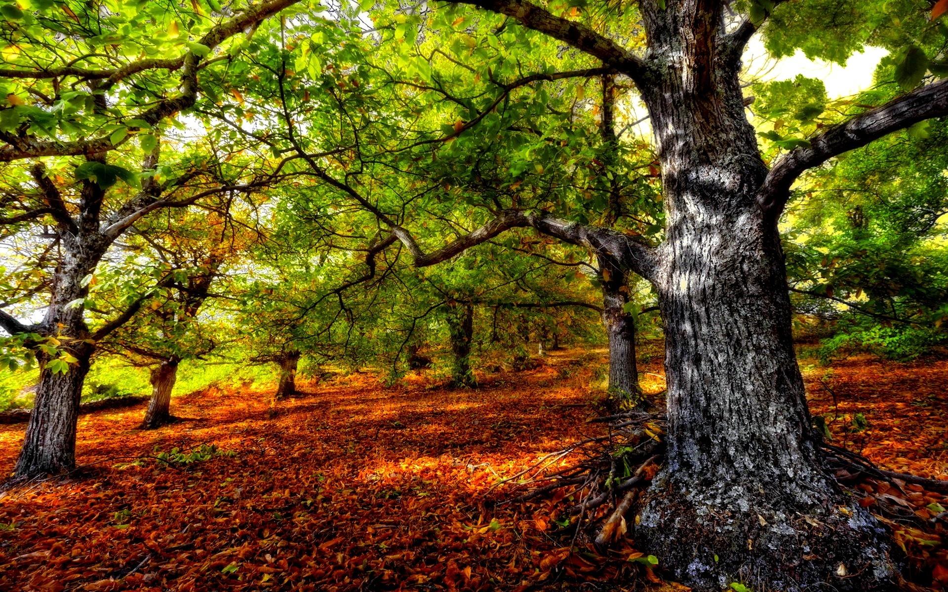3d Wallpaper Images Free Download Forest Desktop Backgrounds Free Download Pixelstalk Net