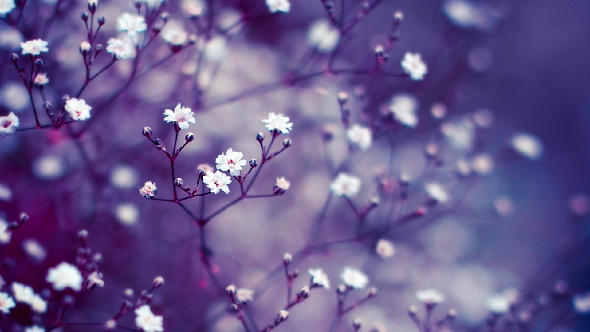 Free Fall Flowers Desktop Wallpaper Lavender Flower Wallpapers Hd Pixelstalk Net